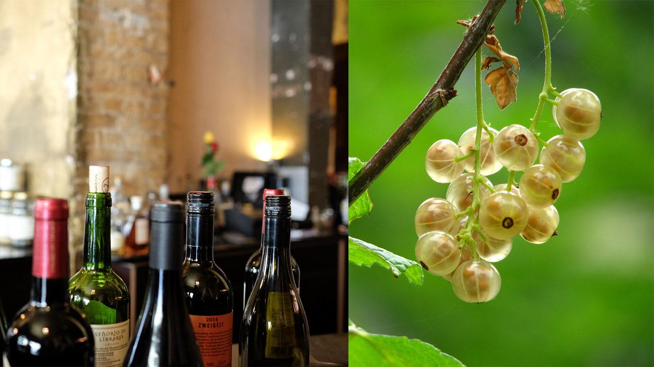 The Wine Corner - Variety Homemade Amla Wine Recipes