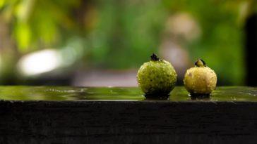 Guava Wine Recipe - Easy Home Made Kerala style